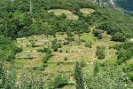 Plantación agrícola abandonada